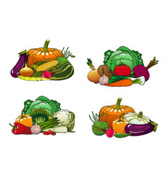 vegetables farm market cabbages and veggies vector image