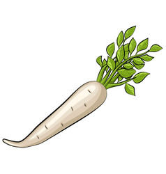 daikon isolated on transparent background vector image