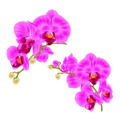 Branches orchids purple flowers tropical plant vector