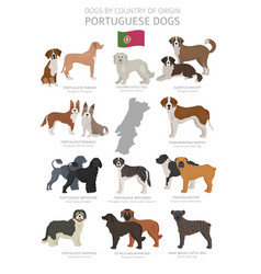Dogs country origin portugal dog breeds vector