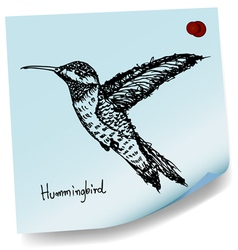 hummingbird sketch on sticky paper vector image
