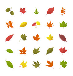 Leaves in fall flat icons vector
