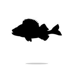 perch fish aquatic black silhouette animal vector image