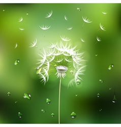 Abstract green background with flower dandelion vector image