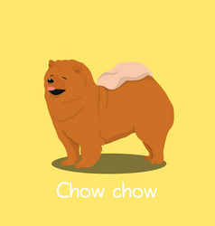 An depicting a cute chow chow dog cartoon vector