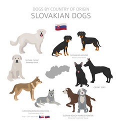 Dogs country origin slovakian dog breeds vector
