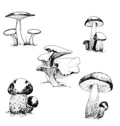 Set of wild mushrooms vector