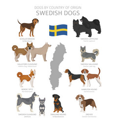 Dogs country origin sweden dog breeds vector