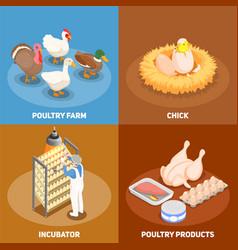 Poultry 2x2 design concept vector