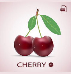 ripe red cherries twin berries with a leaves vector image
