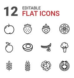 12 vitamin icons vector