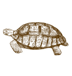 Engraving drawing big turtle vector
