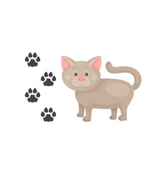funny cat and his footprints domestic animal vector image