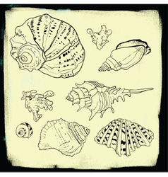 Set of hand drawn seashells vector image