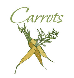 tasty veggies carrots vector image