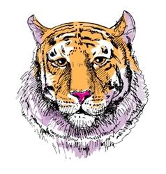 Artwork tiger sketch drawing vector image