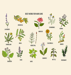Best medicinal herbs for hair care vector