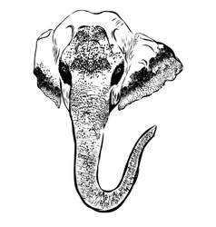 Elephant portrait on white background Hand sketch vector image