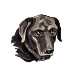 labrador retriever head vector image