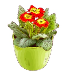 Red primrose in a flowerpot vector