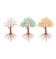 tree in different seasons set vector image