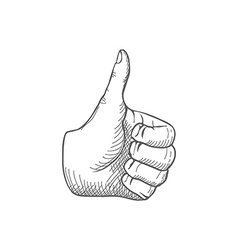 Hand giving a thumbs up vector image vector image