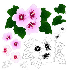 hibiscus syriacus - rose of sharon outline vector image vector image