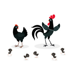 Black chicken family isolated on white background vector