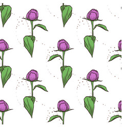 color seamless pattern of peony flowers vector image