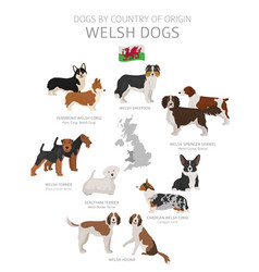 Dogs country origin welsh dog breeds vector