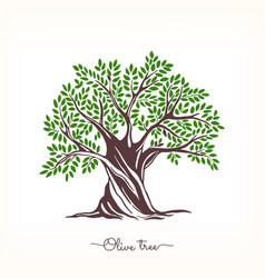 Hand-drawn olive sketch vector