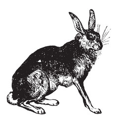 Hare vintage vector