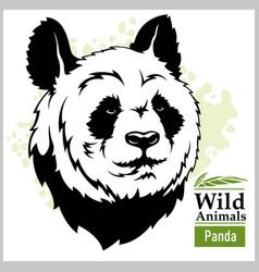 Panda head mascot - head vector