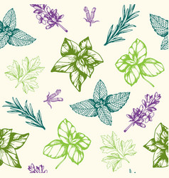 Seamless pattern with provencal herbs vector