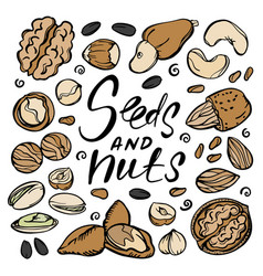 seeds and nuts food sketch clip art vector image