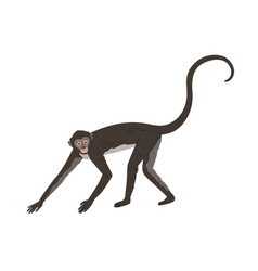 Walking spider monkey with black and gray fur vector