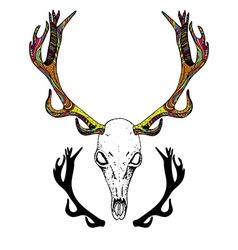 Color Sketch Deer Skull vector image vector image