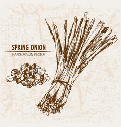 digital detailed line art spring onion vector image