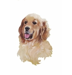 English cocker spaniel Animal dog watercolor vector