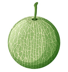 Fresh melon on white background vector