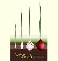 Fresh red onion growth concept vector