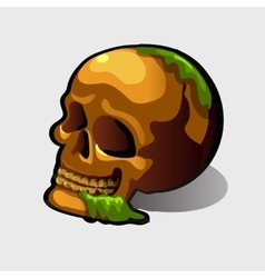Old human skull image for your needs vector image