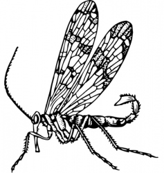 scorpionfly mecoptera vector image