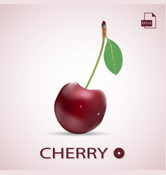 single ripe red cherry with a leaf isolated on a vector image