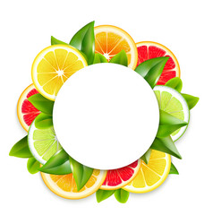 citrus fruits slices arrangement round frame vector image