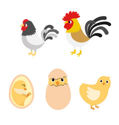 chicken egg life cycle vector image vector image