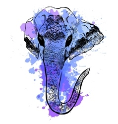 Watercolor elephant portrait on white background vector image vector image