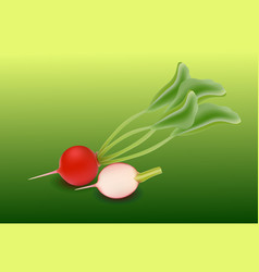 whole radishes with leaves half and flower vector image vector image