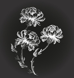 hand drawn Bouquet flowers Peony vintage vector image vector image