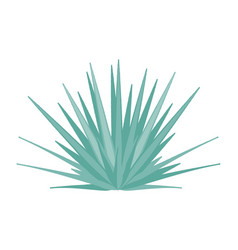 Agave tequilana - blue agave - side view vector